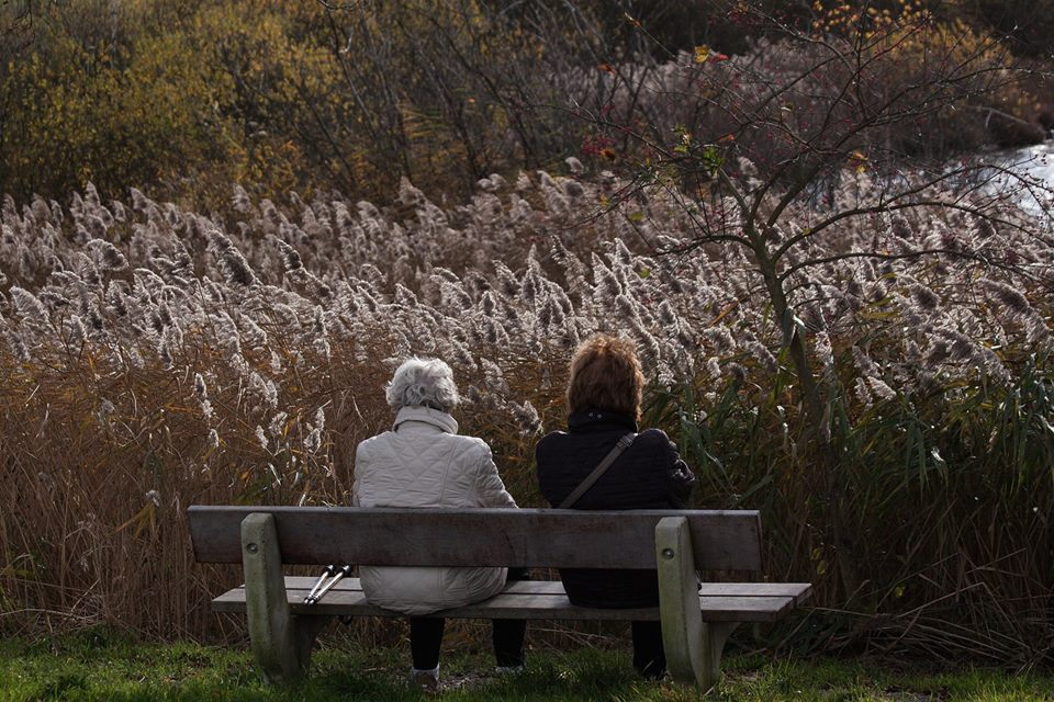 P.A.U.L.A. Kursreihe zum Thema Demenz