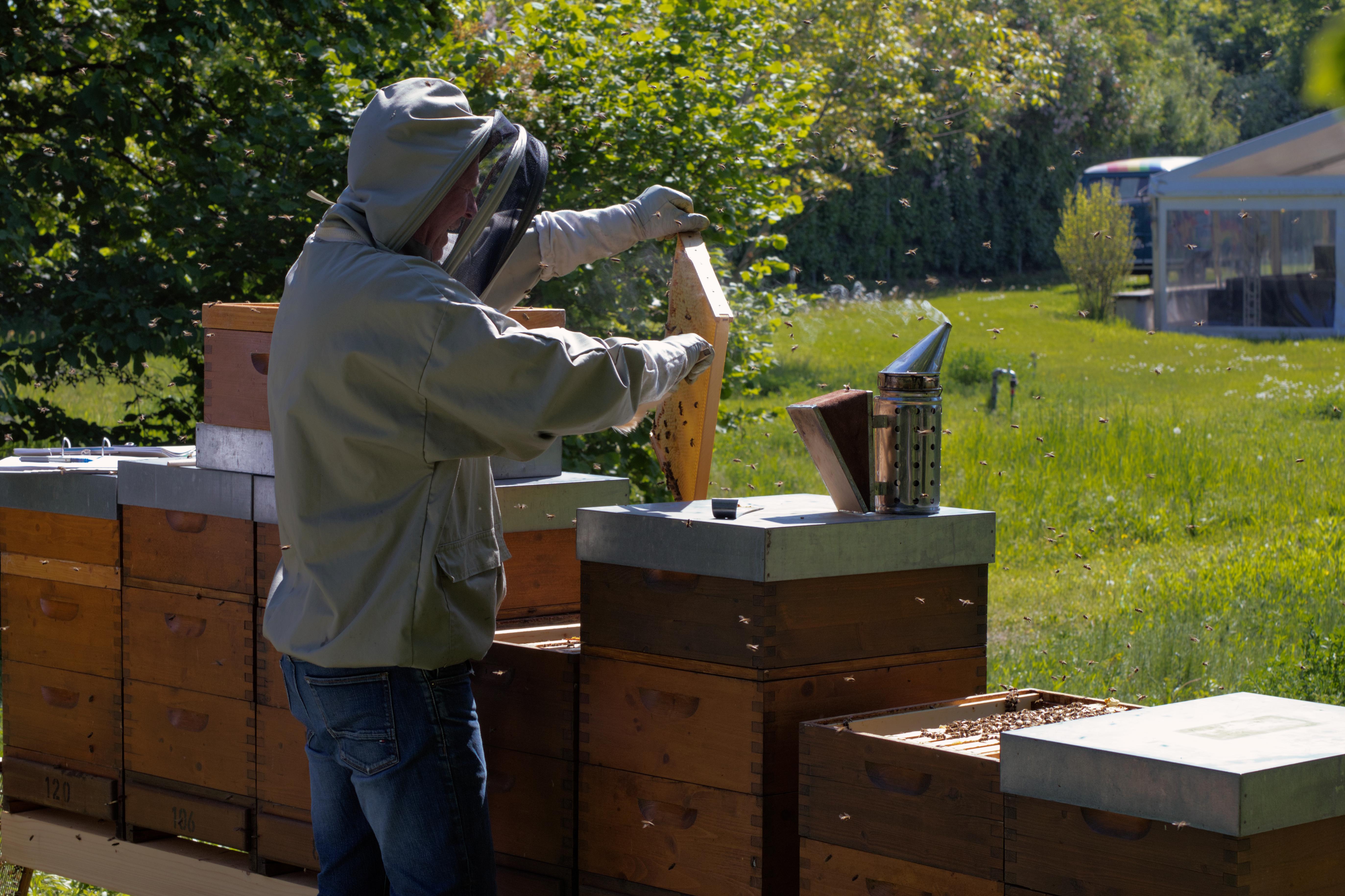 Im Rahmen des EU-Projekts LIFE DICCA wird die Donauinsel zur Bienen-Insel
